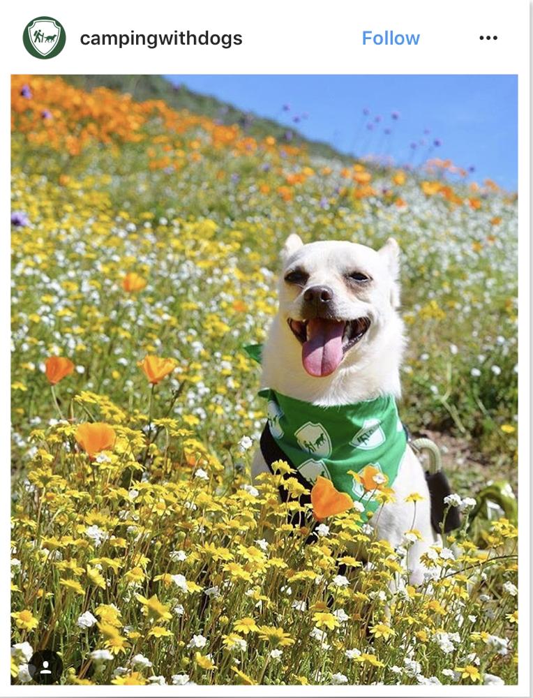 inspiring dog accounts
